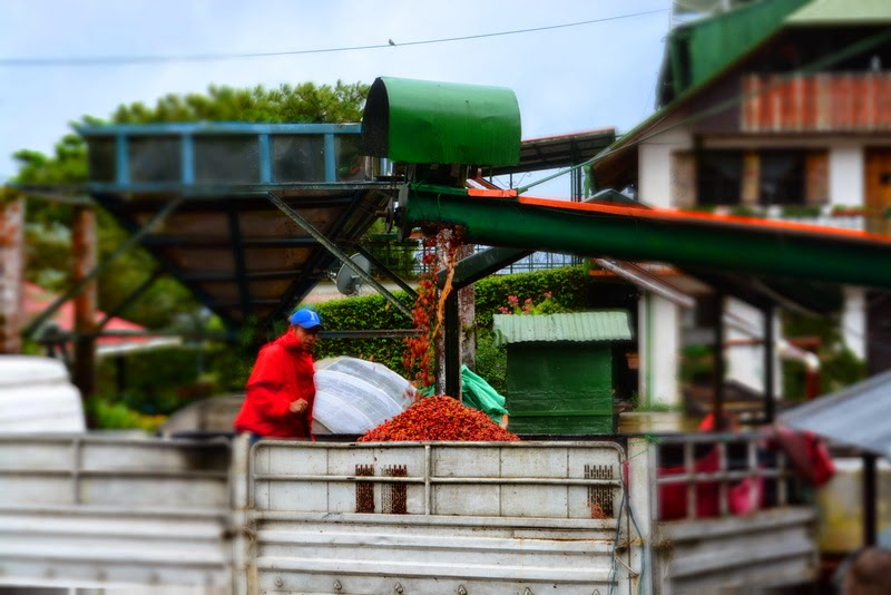 Our coffee farm, Selva Negra Coffee Estate wet mill.